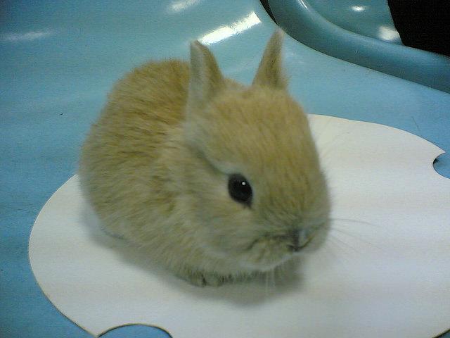 我最愛的麻吉兔兔也將面臨生老病死的問題